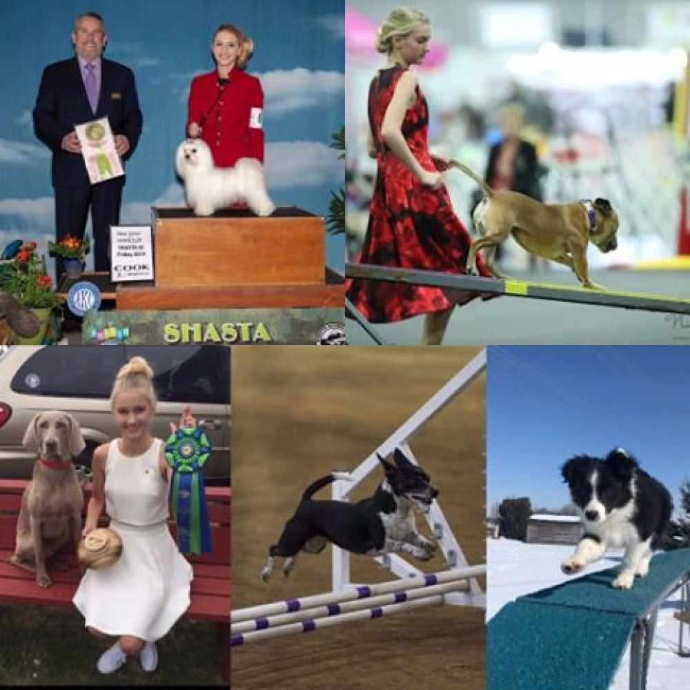 ALL BREED DOG SHOWS, OBEDIENCE TRIALS, and RALLY TRIALS