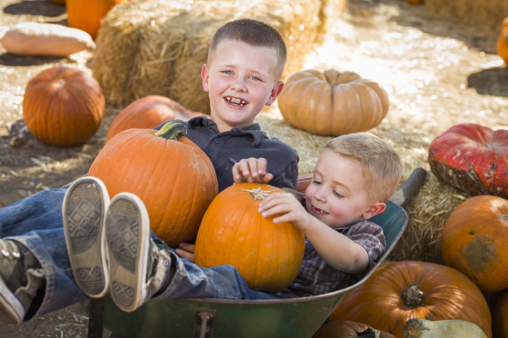 Harvest Mazes and Pumpkin Patch