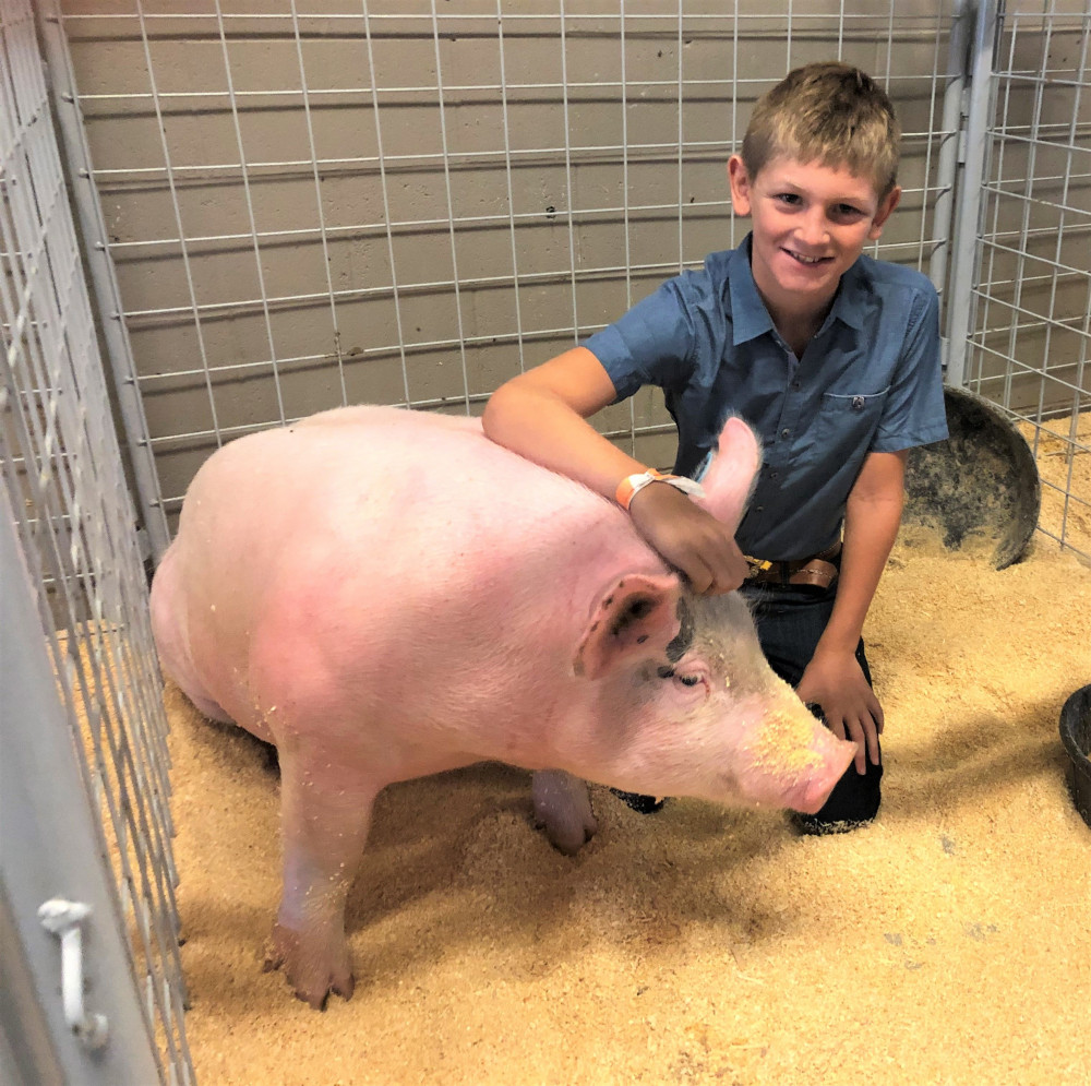 I am in 4-H and show swine